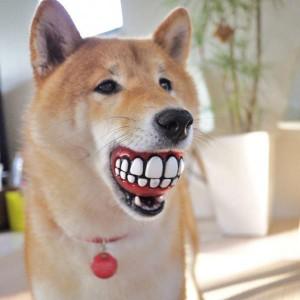 Balle à dents pour chien souriant