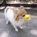 Muselière bec de canard