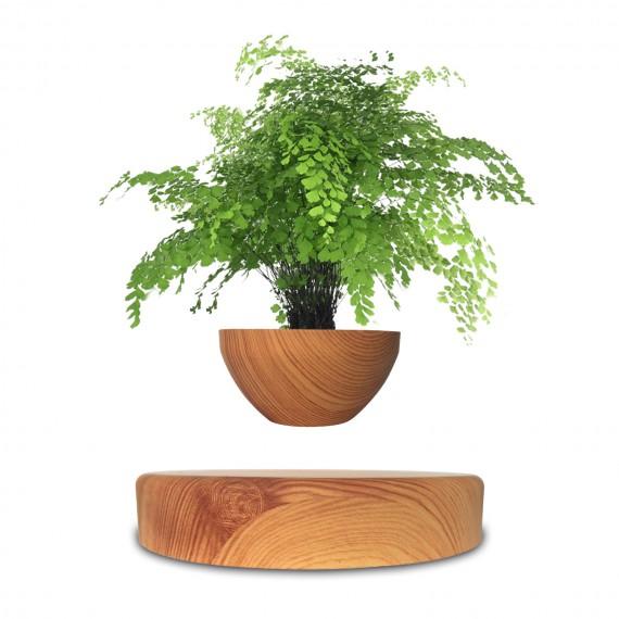 Mini-Jardin en lévitation imitation Bois