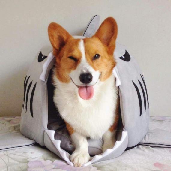 Lit requin pour animaux