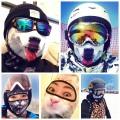 Cagoule de ski chien et chat