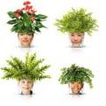 Pot de fleur tête