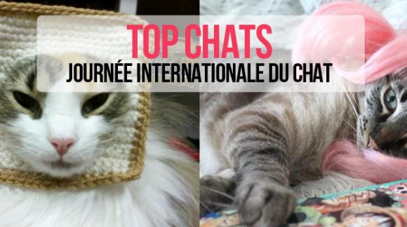 Top Chats : journée internationale du chat ! CAT POWER !